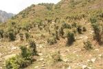 Bhagsu, Himachal Pradesh, India