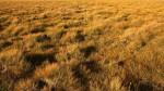 Grass Galore