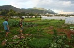 Farms at the edge of Old Lijiang