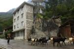 Goat Xing