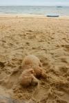 Beach Poodle