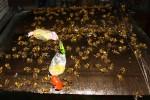 Kyrgyz Bee Trap